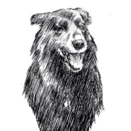 chien-noir-la-laisse