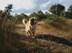 chien-pres-balade-promenade-nature-region-parisienne-paris-la-laisse