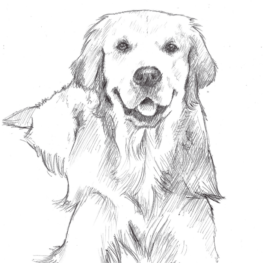 illustration-labrador-la-laisse